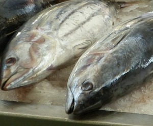fish-market-244415_1280