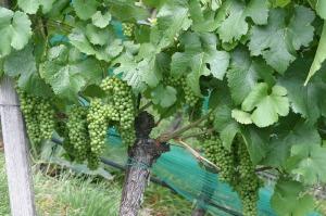 wine-207781_1280